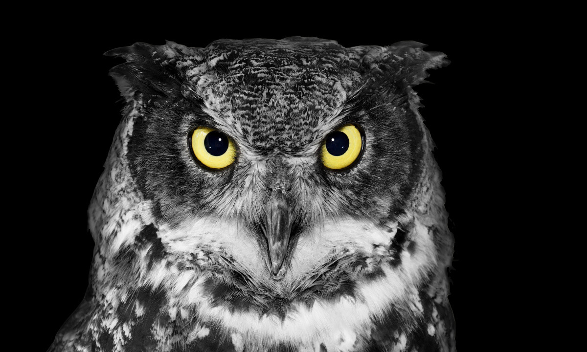 Good News For Night Owls Staying Up Late Has Its
